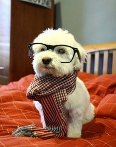 npr dog