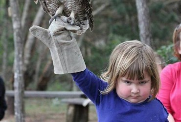 owl-wrath