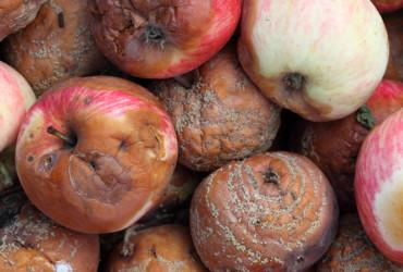 worst-apples
