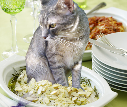 The 7 Best Canned Cat Foods of 2019 - thesprucepets.com